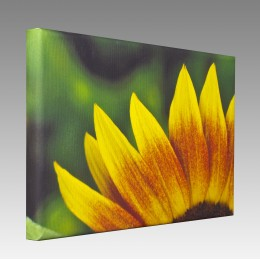 "508x762 [20""x30""] Canvas Board"
